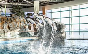 Forfait Aquarium Shedd au Swissôtel Chicago