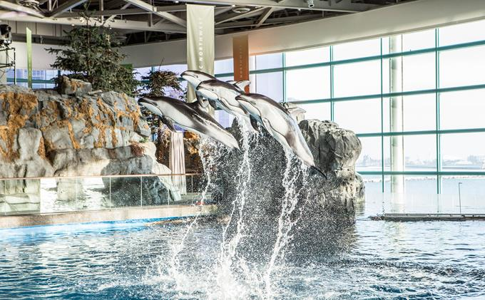 Shedd Aquarium Package at Swissotel Chicago