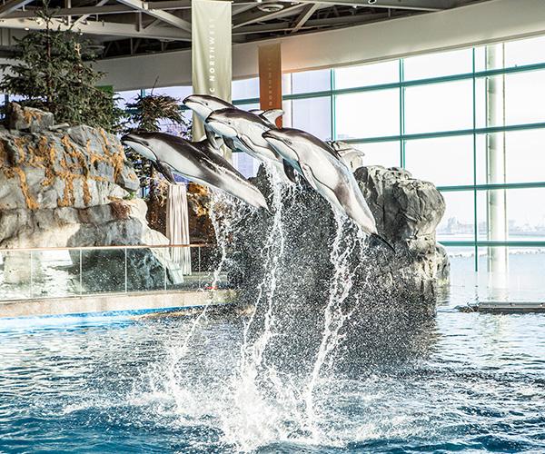 Shedd Aquarium Package Swissotel